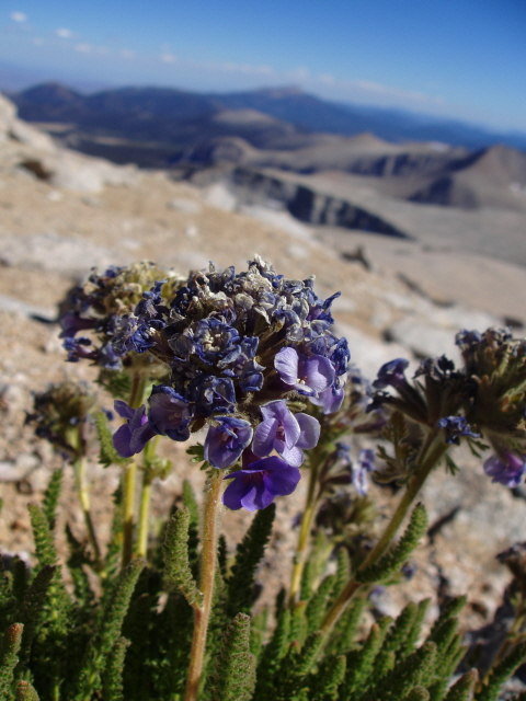 Photo taken on Mt. Langley at about 13,800', Sequoia National Park, Tulare County, CA