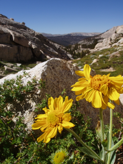 Photo taken near Miter Basin, Sequoia National Park, Tulare County, CA