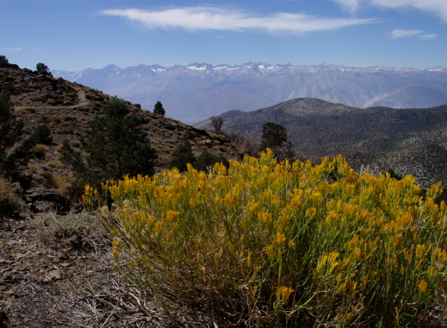 Photo taken near the Schulmann Grove, Inyo National Forest, CA